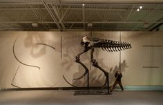 The cast of 'A T. rex Named Sue' in progress! Florida Museum of Natural History photo by Kristen Grace