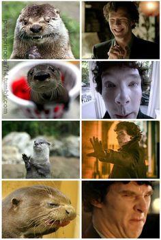 Sherlock Actor, Sherlock Cast, Sherlock Fandom, Sherlock John, Sherlock Holmes Benedict Cumberbatch, Sherlock Holmes Bbc, Benedict Cumberbatch Sherlock, Animal Memes, Funny Animals
