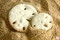 "To present sand dollar cookies @ party, serve in tray with brown/white sugar ""beach sand""...adding a few of those candy rocks would be a great touch, too!"