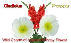 The poppy is the birth flower for those born in the month of august augusts birth flower is gladiolus or sword lily gladiolus represents remembrance mightylinksfo