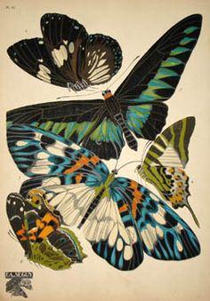 Butterflies Plate 10, Eugene Alain (E.A.) Seguy (1889-1985) from Papillons Editions Duchartre et Van Buggenhoudt, Paris: Mid 1920s  Pochoir prints