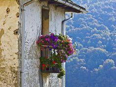 blooming balcony