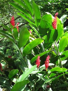 images of the rain forest | Flowers of the Rainforest - Photo by Sharon M | Viator