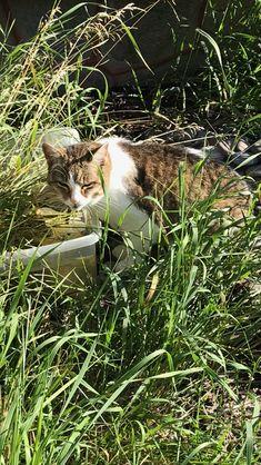 Sassy Pet Sitting, Sassy, Pets, Animals, Animals And Pets, Animales, Pet Care, Animaux, Animal