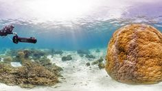 Swim Through the Oceans at Your Desk With Google's 360-Degree Seaview | Philippe Cousteau (grandson of the famous underwater explorer Jaques-Yves Cousteau), who had joined the team to film a documentary, uses the Survey's support scooter near Wilson Island on the Great Barrier Reef. The huge Porites coral on the right is estimated to be over 500 years old.  | Credit: Catlin Seaview Survey | From Wired.com