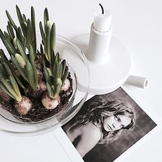 """""""  at my table   have a real nice Tuesday   take care of this day   take care of each other   #flower #pärlhyacint #springfeeling #paoloroversi…"""""""