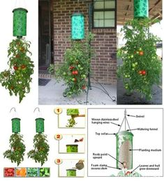 Growing Tomatoes Topsy Turvy Upside Down Hanging Planter System Tomatoes In Original Box - Growing Tomatoes Indoors, Growing Tomato Plants, Growing Tomatoes In Containers, Growing Vegetables, Grow Tomatoes, Upside Down Plants, Upside Down Tomato Planter, Tomato Farming, Container Gardening