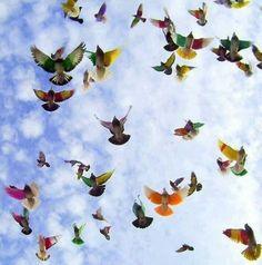 Birds flying...