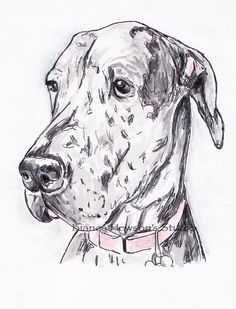 """Find out even more info on """"great dane dog"""". Look at our website. Weimaraner, Blue Merle Great Dane, Pencil Drawings Of Animals, Dane Puppies, Great Dane Puppy, Cute Little Puppies, Yorkshire Terrier Puppies, German Shepherd Puppies, Watercolor And Ink"""