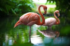 Meet the Famous Flamingos of Dreams Punta Cana! – Day Dreams | The ...