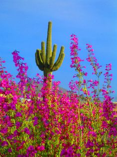 My favorite cactus!  The desert is so beautiful year round, but especially in the spring and fall.