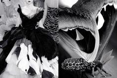 Показ Dior осенью 2010 и бабочка павлиноглазка- атлас