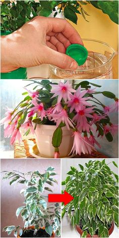 Idea Of Making Plant Pots At Home // Flower Pots From Cement Marbles // Home Decoration Ideas – Top Soop Home Flowers, Indoor Flowers, Exotic Flowers, Pretty Flowers, Porch Plants, Indoor Plants, House Plants, Cactus Flower, Flower Pots