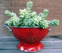 colander for succulent container