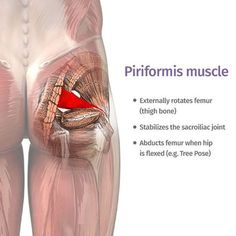 piriformis : how can one little muscle cause so much trouble? Yoga poses and sequences to help with piriformis syndrome - The piriformis : how can one little muscle cause so much trouble? Yoga poses and sequences to help with piriformis syndrome - Muscle Piriforme, Psoas Muscle, Muscle Pain, Fitness Workouts, Syndrome Pyramidal, Tight It Band, Le Pilates, Sciatic Pain, Sciatic Nerve