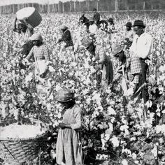 In 1793, Eli Whitney invented the cotton gin, causing the need for more slaves to work in the fields to be able to keep up with the machines. Cotton quickly became the top crop in Georgia, which the state's economy depended on.
