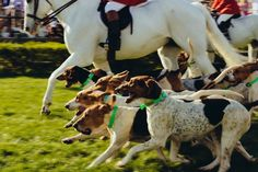 Iroquois Steeplechase Running of the Hounds, photo by Jason Myers