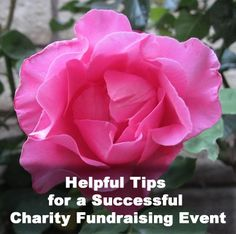 Interview with Teresa Mathers: Get some great charity event tips from someone who has worked on both sides - as a fundraising volunteer and a coordinator! Interview with Teresa Mathers. Relay For Life, Charity Event, Raise Funds, Fundraising Events, Sales And Marketing, Non Profit, Helpful Tips, Event Planning, Benefit