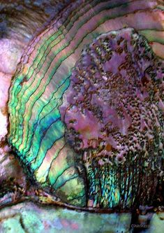 Abalone shell- just beautiful.