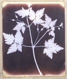 would make a pretty sweet tattoo. Salted paper print from a calotype negative by William Henry Fox. Talbot (1800-1877).