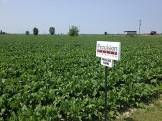 Sugar beets planted with Precision Planting technology in #CKOnt looking great this year. @precision_plant in #OntAg