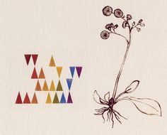 hawkweed / with wallpaper / color scale
