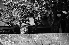 東京猫色 : 猫 の 出