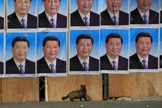 CHINA-ODDLY/ A cat is seen near a building covered in hundreds of posters of Chinese President Xi Jinping in Shanghai, China, March 26, 2016. Residents nearby said the building was slated to be demolished. The whereabouts of the occupant was unclear. REUTERS/Aly Song