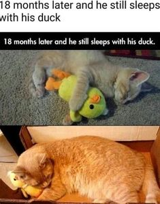 Super Cute Animals, Cute Little Animals, Cute Funny Animals, Funny Cute, Animal Jokes, Funny Animal Memes, Cat Memes, Cute Animal Photos, Funny Animal Pictures