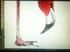 Cleaning up! @agentsprong #flamingo #attentiontodetail #illustration #bird #waterbird #pink