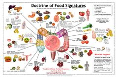 Earth Heal - Doctrine Of Signatures - Shape Of Food Indicates Which Organ It Benefits