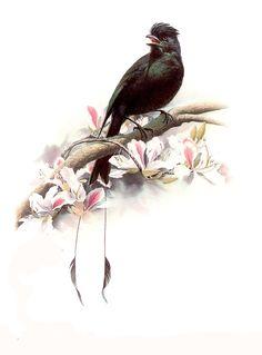 Tranh vẽ chim và hoa, quả