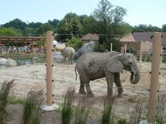 The new Elephant Crossing at the Cleveland Metroparks Zoo. Cleveland Rocks, Cincinnati, Ohio Attractions, Cleveland Metroparks, U.s. States, Columbus Ohio, Wedding Humor, Animal Design, Usa
