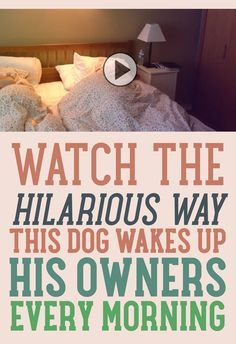Watch The Hilarious Way This Dog Wakes Up His Owners Every Morning!