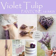 Violet Tulip Palette http://www.theperfectpalette.com/2013/11/top-10-pantone-colors-for-spring-2014.html