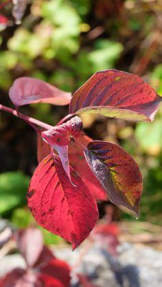 Fall Leaves | photo by Naomi Larocque | www.fashionismyreligion.ca