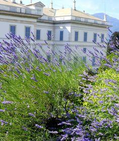 Villa Melzi, Bellagio #lakecomoville