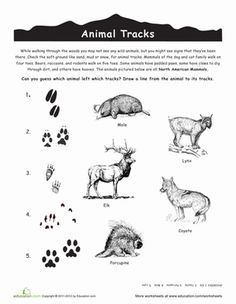 southeastern us animal worksheets - Google Search