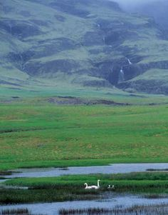 Swans and Waterfall — Iceland, June 2002 - Iceland - a Photographer's paradise - Luminous Landscape