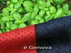 Genoa e basilico di Genova Pra'. Genoa CFC 1893 and Genova Pra' basil = Genoanity