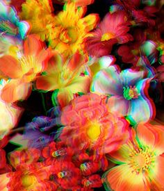 crazy flowers