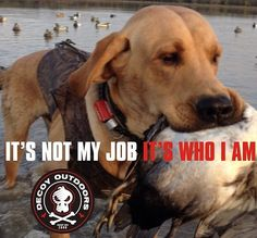 Decoy Outdoors Yellow Lab Duck Hunting Quote