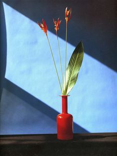 Robert Mapplethorpe Robert Mapplethorpe, Blue Flowers, Still Life, Photo Art, Contemporary Art, Inspiration, Artists, Amazing, Modern