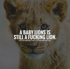 Hustle Quotes, Lions, Movie Posters, Lion, Film Poster, Popcorn Posters, Film Posters, Posters