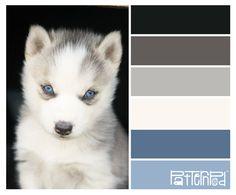 Huskie puppy #patternpod #patternpodcolor #color #huskie