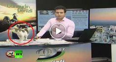Pequeno Gatinho Invade Estúdio De Televisão Durante Emissão Em Direto http://www.funco.biz/pequeno-gatinho-invade-estudio-televisao-emissao-direto/