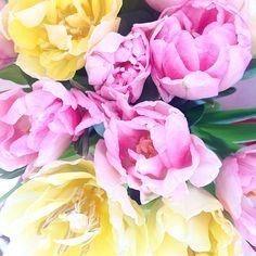 С весной!!!!!!!) #flowers#тюльпаны#love