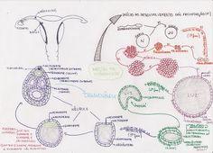 RESUMOS E MAPAS MENTAIS - Biologia Prof. Felp's