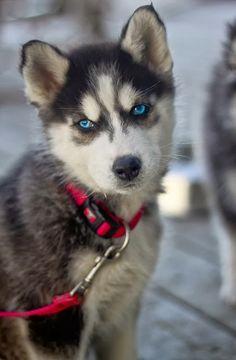 Amazing Puppy