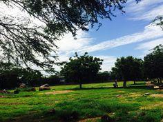L'art de sublimer naturellement , la nature est tellement belle qui suffit juste de regarder autour de nous pour trouver le bonheur  Dakar Sacré-Coeur  Crédits : Mernat Karima Instagram : mernat_bls Senegal Travel, Golf Courses, Nature, Instagram, Art, Finding Happiness, Sacred Heart, Art Background, Naturaleza
